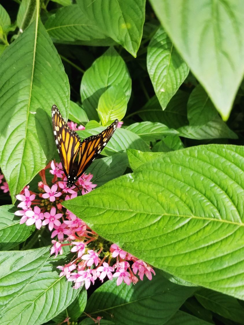Bucket List: Visit A Butterfly Garden | Uncustomary