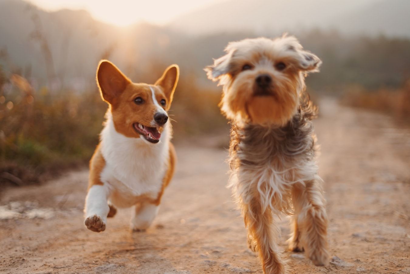 CBD Oil: A Wonder Panacea Even For Our Canine Friends | Uncustomary