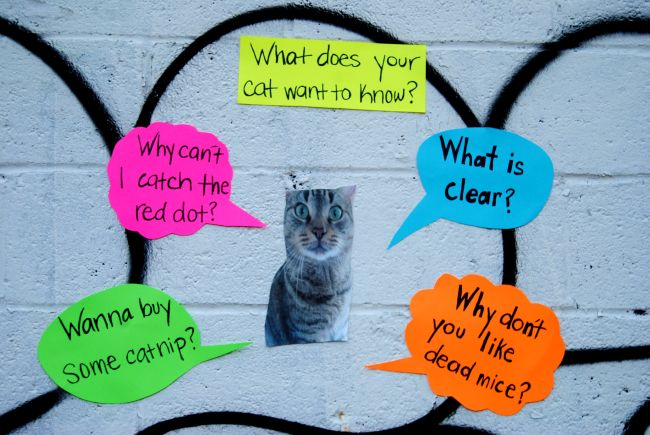 Answer Your Cat's Questions | Uncustomary Art