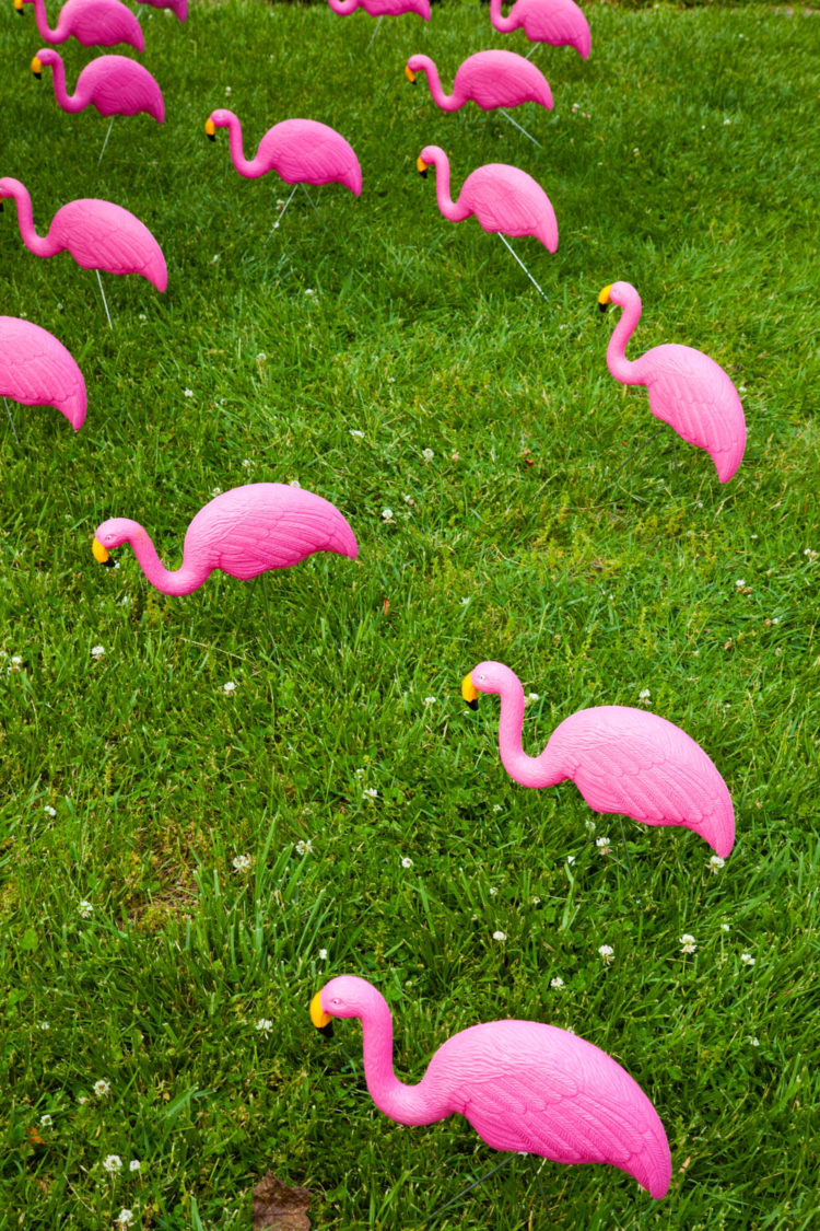 Flamingo Flocking | Uncustomary